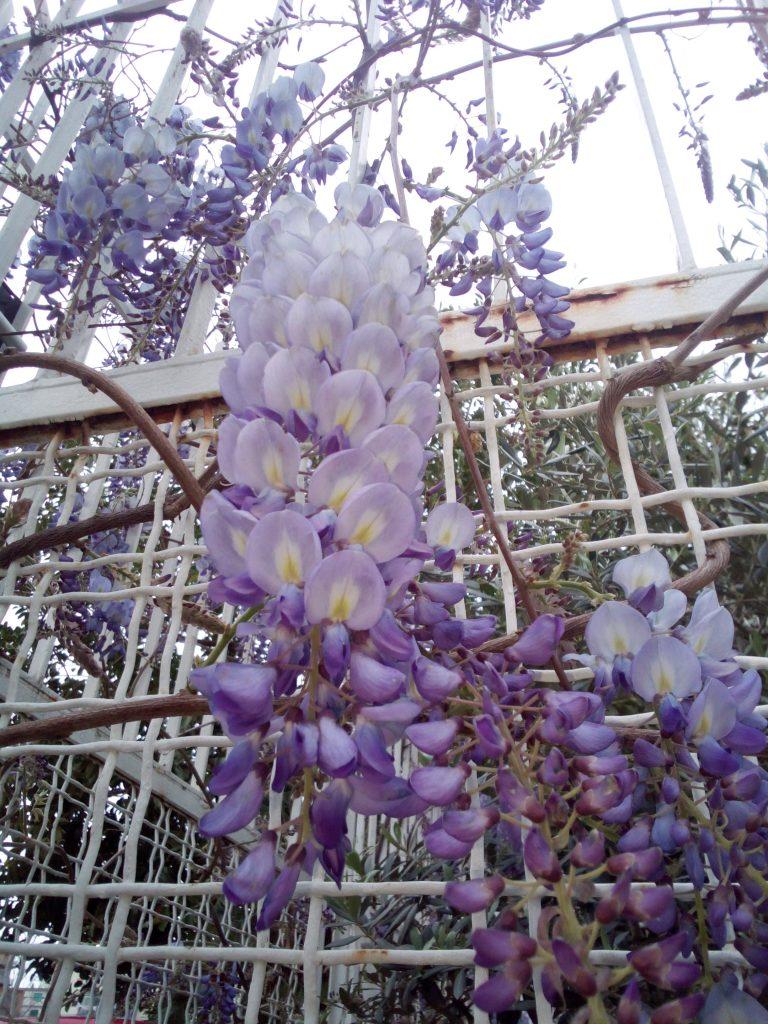 giardino fiori
