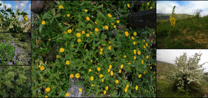 piante autoctone permacultura