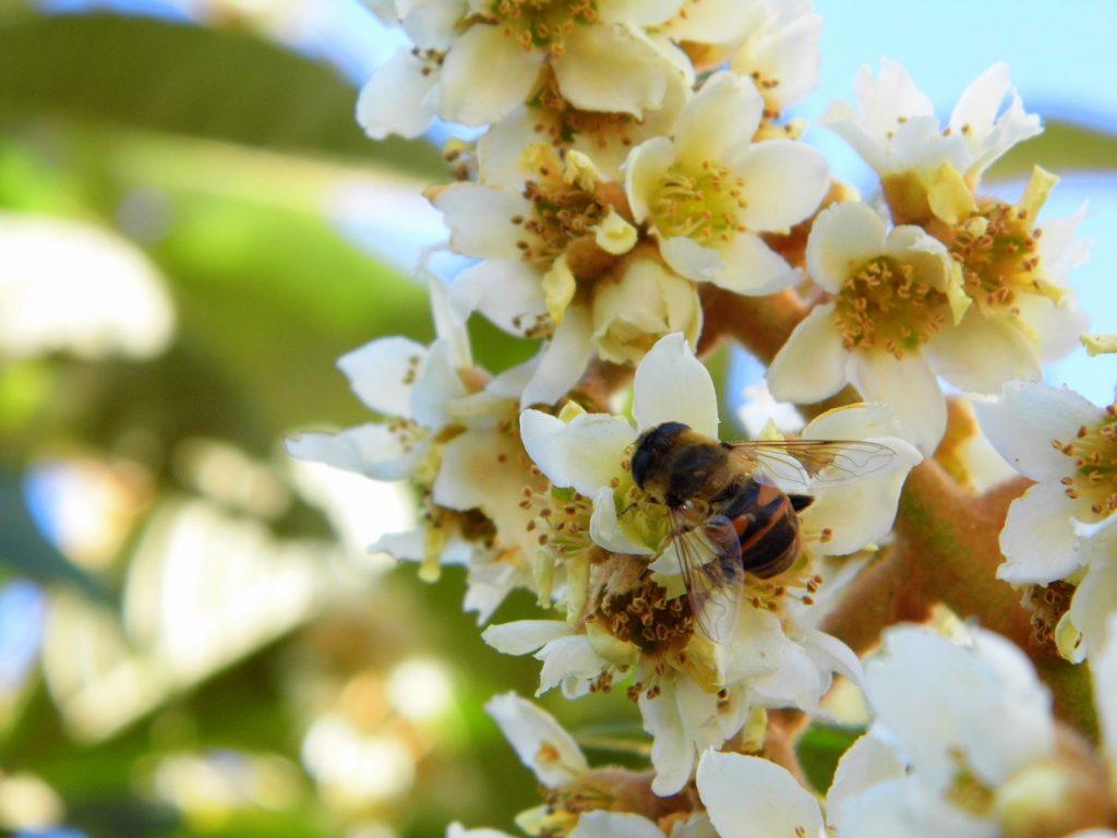 biodiversità agricoltura organica impollinatori