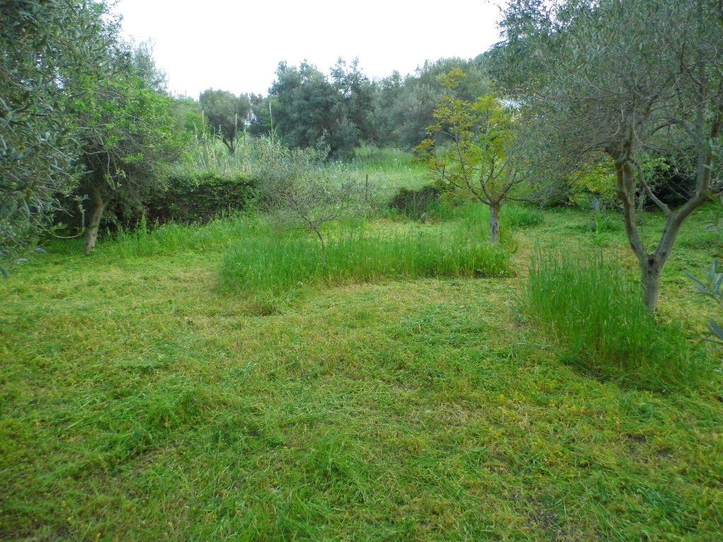 agricoltura organica