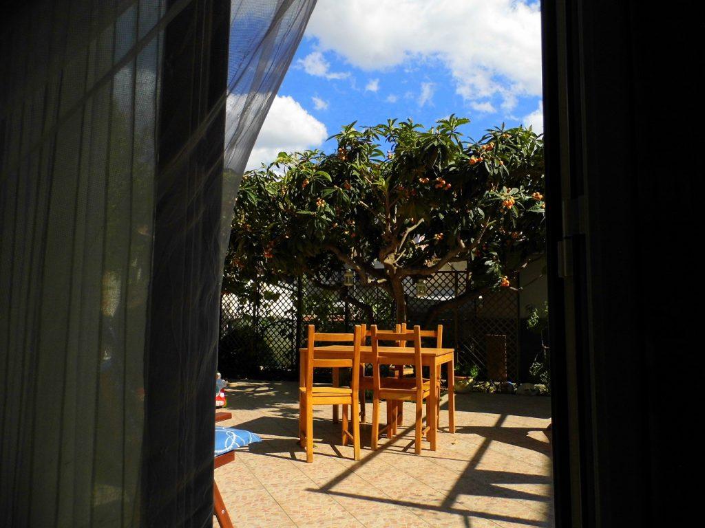 nespolo giapponese giardino
