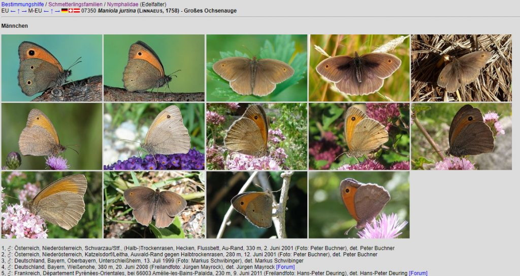 farfalle database germania