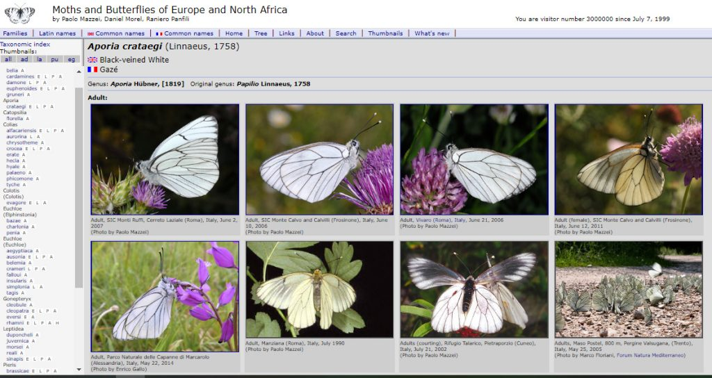 leps database farfalle