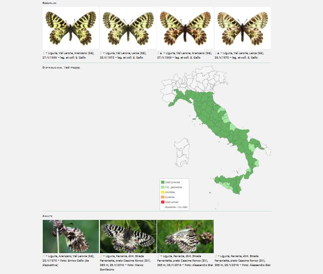 farfalle database italia
