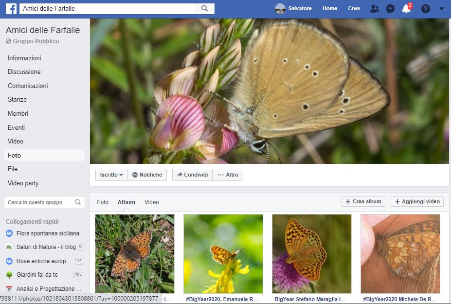 farfalle identificazione