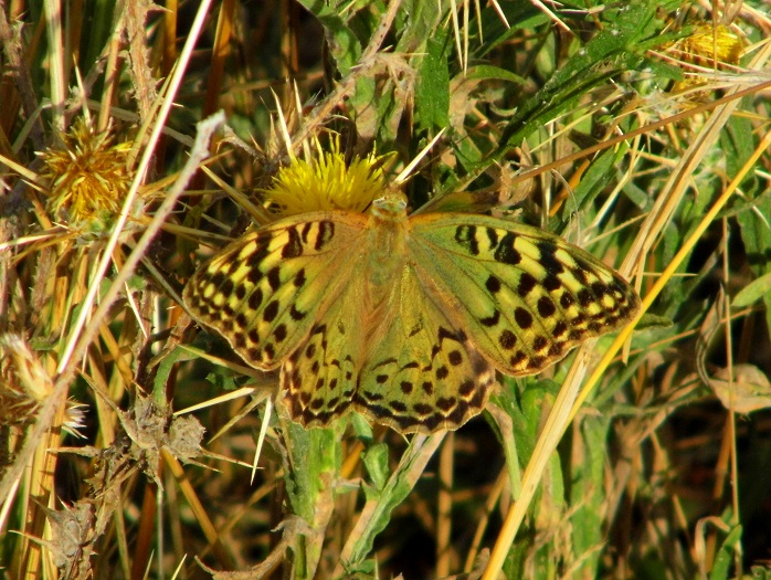 farfalle mitologia pandora