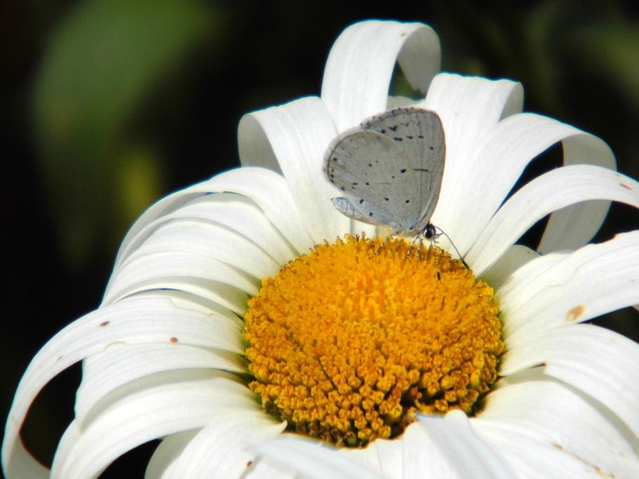 farfalle biodiversità