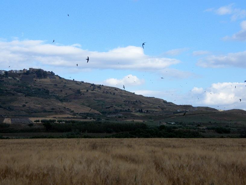 uccelli meteo