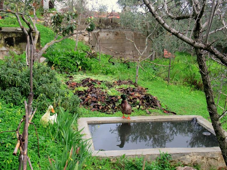 anatre permacultura