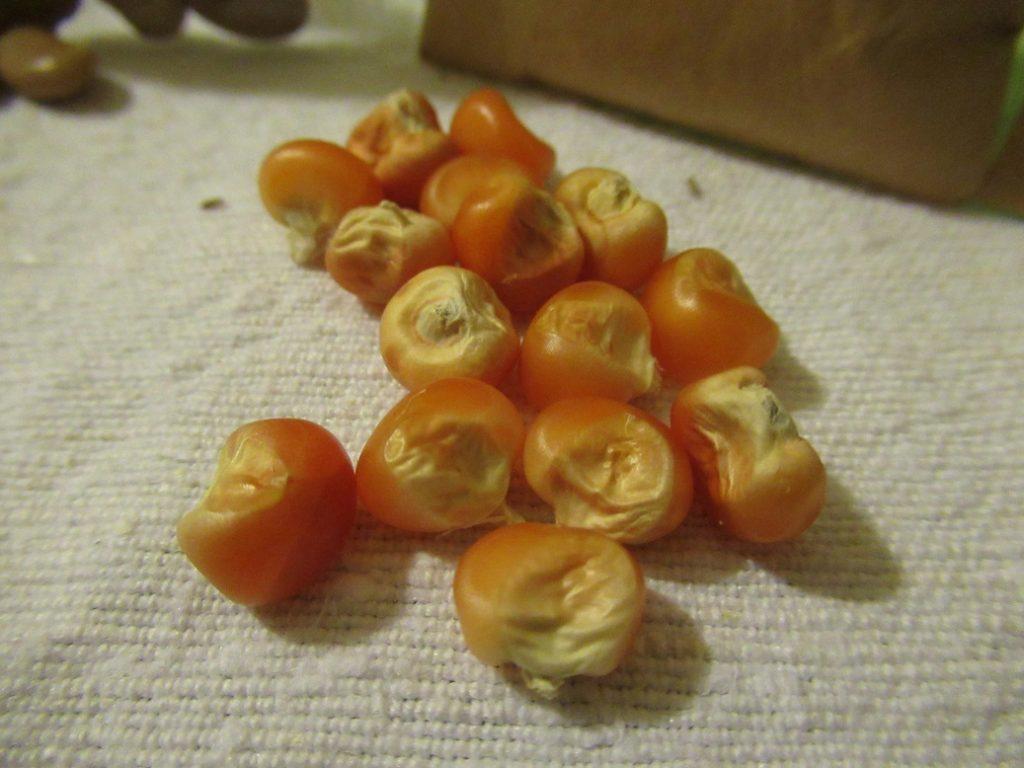 cultivar italiane