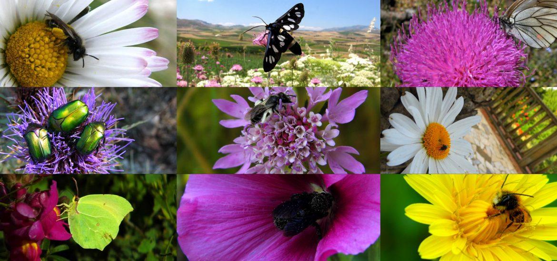 impollinatore fiore