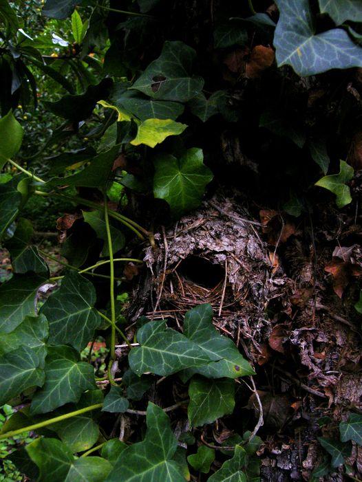 biodiversità giardino