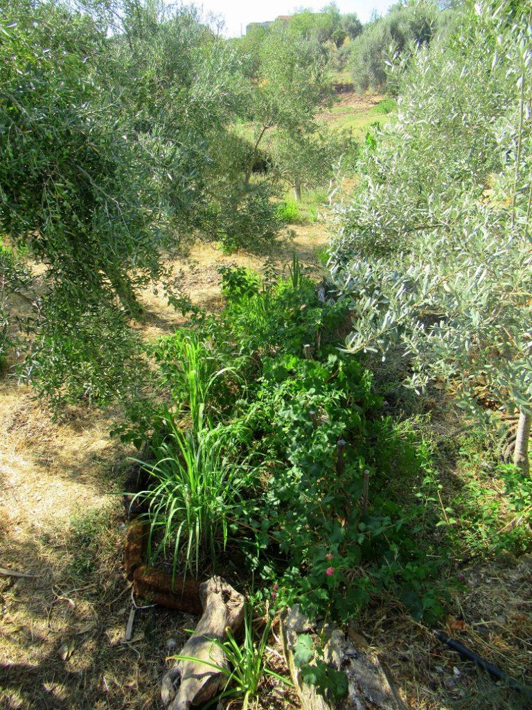 tropicali Sicilia