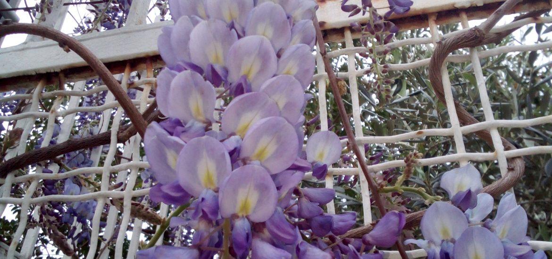 giardino fiori rampicanti