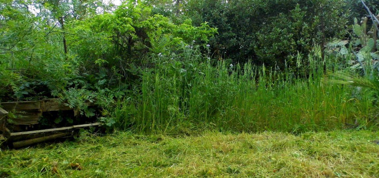 gestione erbe selvatiche