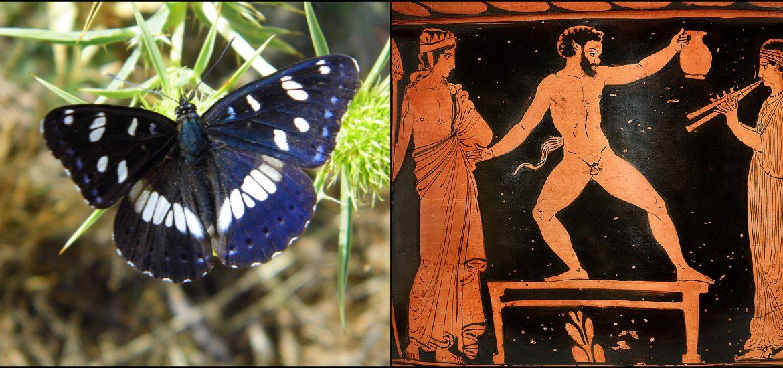 farfalle mitologia